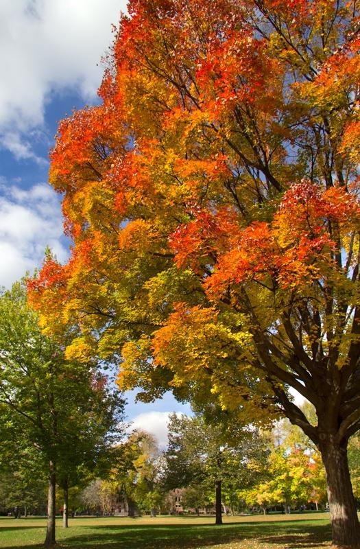 Carleton In Fall