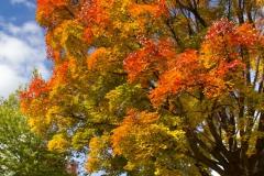 Carleton In Fall (Campus)